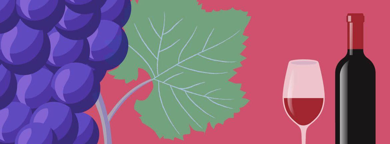 Nota de cata de vino tinto de elvi.net