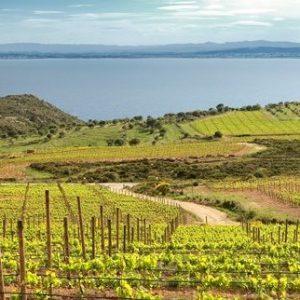 Enoturismo Winetourism Empordà by elvinet