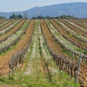 Enoturismo Winetourism Penedès by elvinet