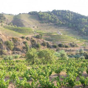Enoturismo Winetourism Priorat by elvinet