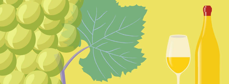 Nota de cata de vino blanco de elvi.net